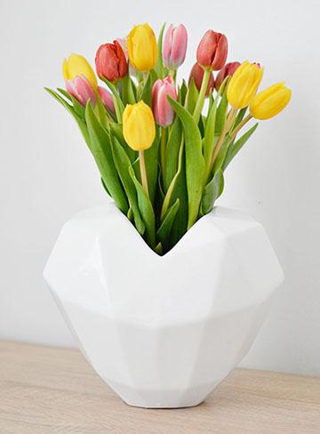tulipan-cat