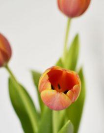 florero tulipanes2
